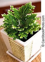 Pot plant.