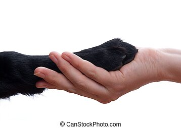 handshake between dog and hand - a handshake between a dog...