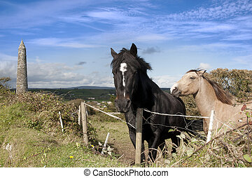 grazing Irish horses and ancient landmark tower - two Irish...