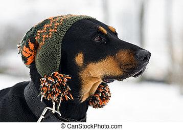 moderno, perro