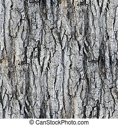 seamless texture white tree bark wallpaper gray background...