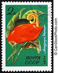 affrancatura, fenicottero, fiore, francobollo,  Anthurium,  1971,  Russia