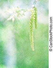 primavera, natura, germoglio, composizione