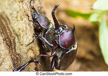 Time lapse of Beetle courtship for adv or others purpose use