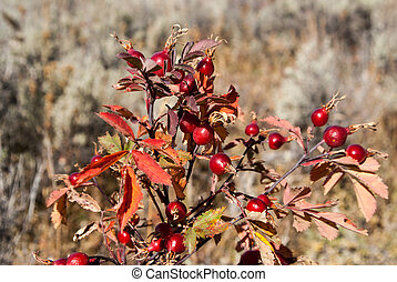 Red Berry Bush - Red berry bush in rural field