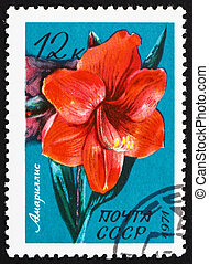 Postage stamp Russia 1971 Belladonna Lily, Amaryllis -...