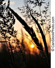 Silhouette of grass in sunset