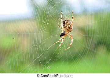 European garden spider in its web - Detail view of European...