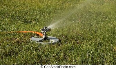 lawn sprinkler - oscillating lawn sprinkler irrigating a...