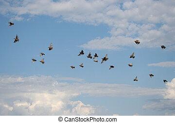 menekülés, madarak