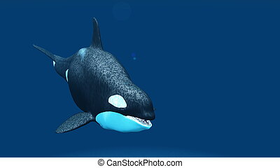 killer whale - image of killer whale