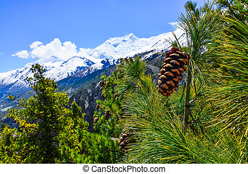 Cone on the tree with winter mountain peaks background -...