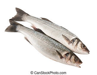 Sea bass - Two Sea bass isolated on white