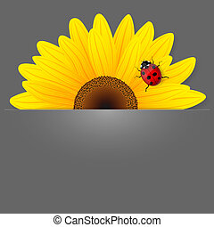 Sunflower and ladybird on grey background.