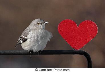Mockingbird With A Heart - Northern Mockingbird (Mimus...