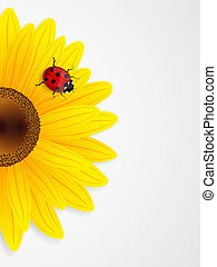 Sunflower and ladybird on white background.