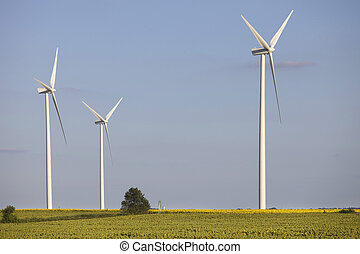 windturbine - farm of windturbines in the north of France