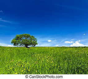 Spring summer green field scenery lanscape with single tree