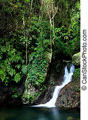 Jungle with waterfall