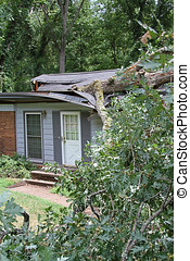 White Oak Fallen on a House