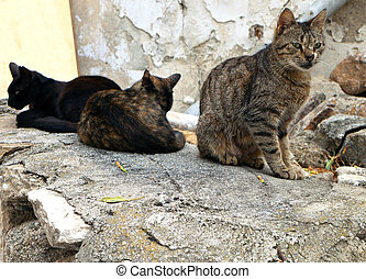 Cats in a Greek island - Cats at the old city of Naxos...