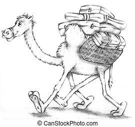 camel, pencil, deser