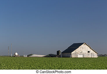 White Barn in Early Morning Light