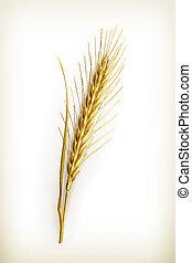 Ear of wheat, vector