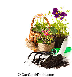 Gardening. - Potted Daisy flowers, pansies, and strawberry...