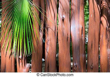 tropical wooden trunk wll and palm tree