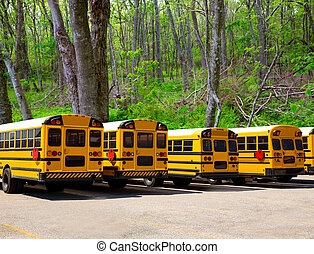 American typical school buses row in a forest outdoor -...