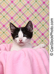 Curious Kitten on a Pink Soft Background