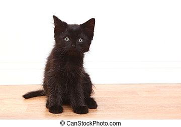 Curious Black Baby Kitten on White