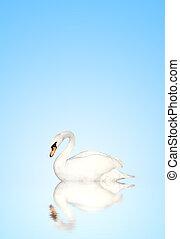 天鵝, 啞巴