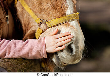 Girl stroking her pony - Hand of a young girl stroking her...