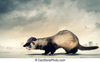 Funny ferret in hat - Image of funny ferret in hat against...