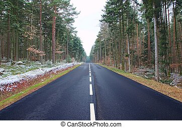 Symmetry and Convergence in the Black Forest - A road in the...