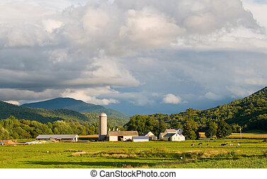 Vermont Dairy Farm - A pastoral view, of a Vermont dairy...