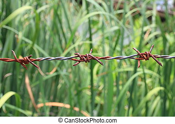Rusty barbed wire on green field.