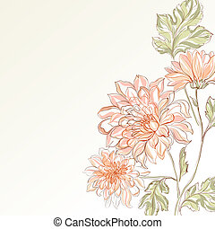 Branch of Chrysanthemum illustration