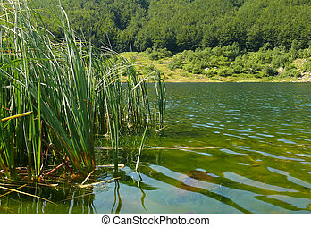 lake and grass