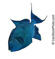 Blue triggerfish (Pseudobalistes fuscus) isolated on white...