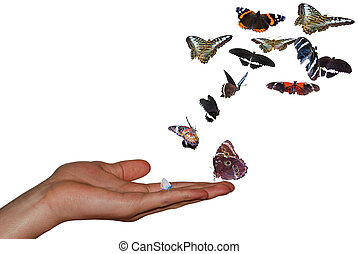hand with many colorful butterflies white