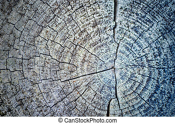 Cross section of tree, close-up wooden cut texture