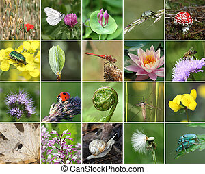 Biodiversity collage with all non-agricultural value plants...