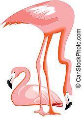 flamingo birds - nice flamingo birds isolated on white...