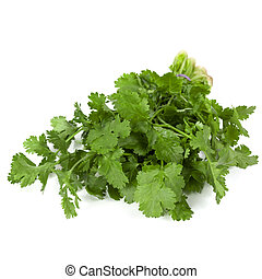 Cilantro Isolated - Cilantro isolated on white background