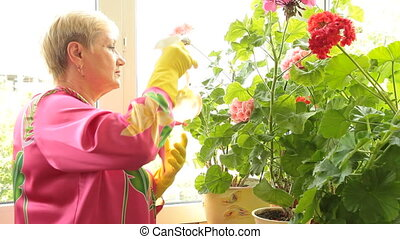 woman caring for flowers in pots - Mature woman caring for...