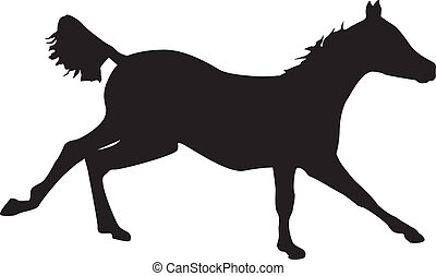 Colt galloping - Silhouette of a colt galloping