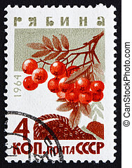 Postage stamp Russia 1964 Mountain Ash, Rowan, Deciduous...